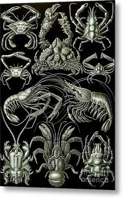 Examples Of Decapoda Kunstformen Der Natur Metal Print by Ernst Haeckel