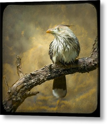 Exotic Bird - Guira Cuckoo Bird Metal Print by Gary Heller