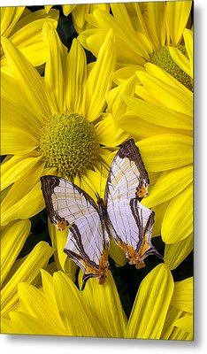 Exotic Butterfly Metal Print by Garry Gay