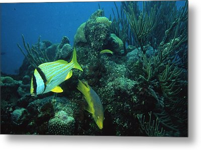 Exotic Fish Metal Print by Retro Images Archive
