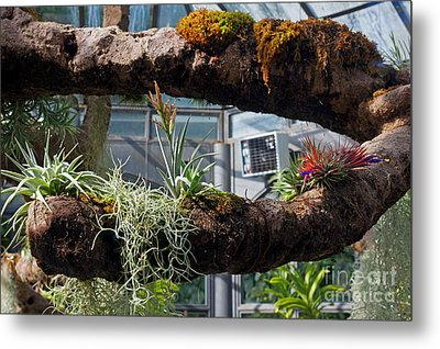 Exotic Plants Metal Print by Rod Jones