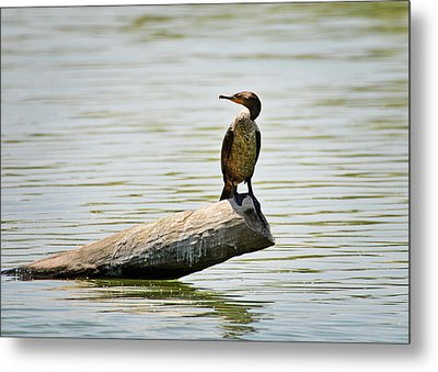 Metal Print featuring the photograph Experience Nature In Estero San Jose by Christine Till