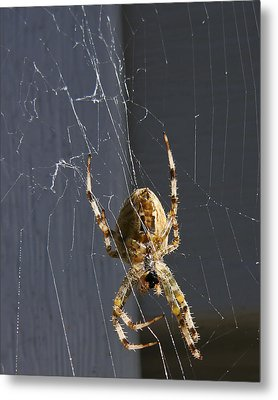 Metal Print featuring the photograph Exploring The Web by Rhonda McDougall
