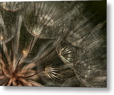 Explosion  Metal Print by Betty Depee