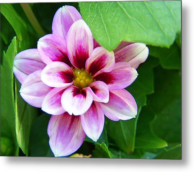 Exquisite Metal Print by Aimee L Maher Photography and Art Visit ALMGallerydotcom