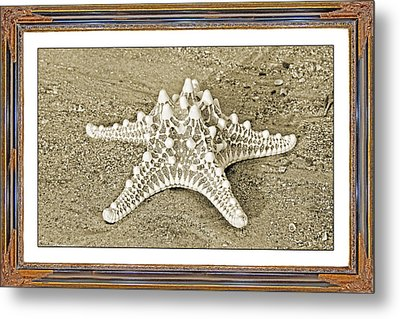 Exquisite Common Metal Print by Betsy Knapp