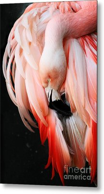 Exquisite Pink Flamingo #1 Metal Print