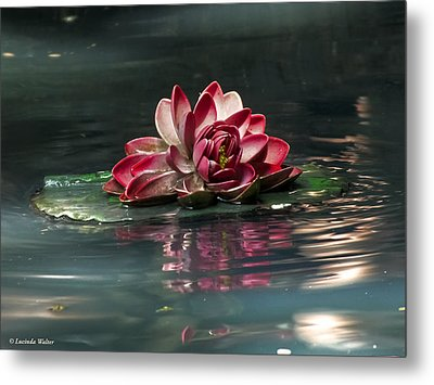 Metal Print featuring the photograph Exquisite Water Flower  by Lucinda Walter