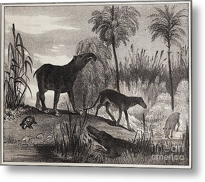 Extinct Prehistoric Animals, 1837 Metal Print by Paul D. Stewart