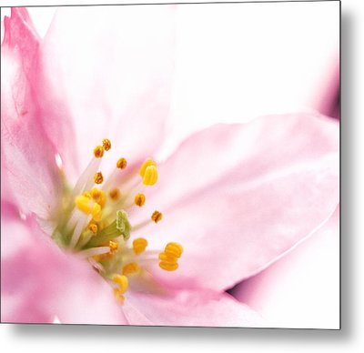 Extreme Close Up Of Cherry Blossom Metal Print