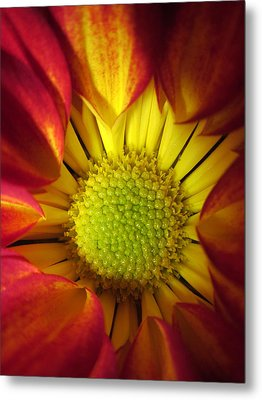 Eye Candy Metal Print
