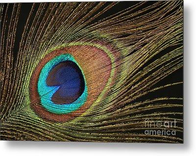 Eye Of The Peacock #5 Metal Print