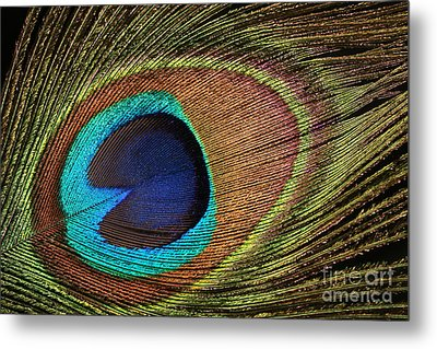 Eye Of The Peacock Metal Print by Judy Whitton