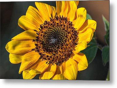Eye Of The Sun Metal Print by Michael Moriarty