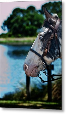 Eye See You Metal Print by Frank Feliciano