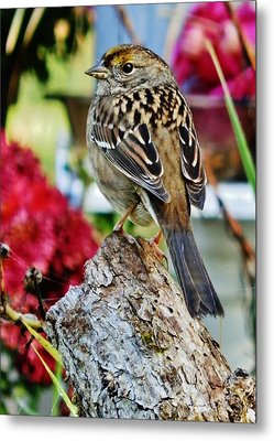 Metal Print featuring the photograph Eyeing The Sparrow by VLee Watson