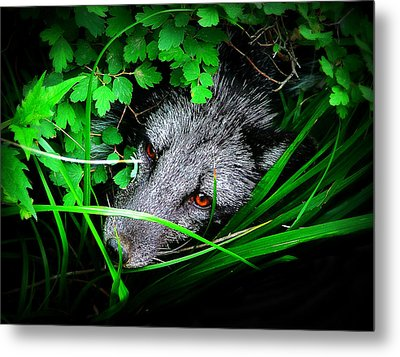 Eyes In The Bushes Metal Print