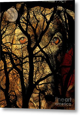 Eyes In The Sky Metal Print by Judy Wood