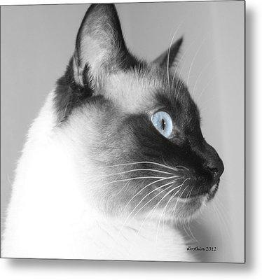 Eyes Of Blue Metal Print by Dick Botkin