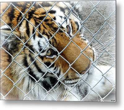 Eyes Of Captivity Metal Print