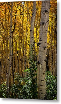 Metal Print featuring the photograph Eyes Of The Forest by Ken Smith