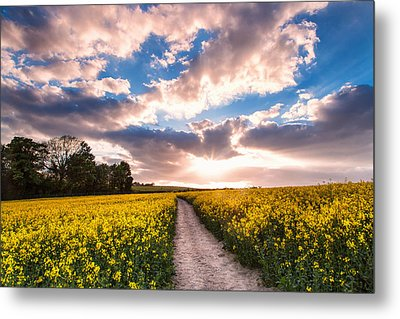 Eynsford Fields Metal Print