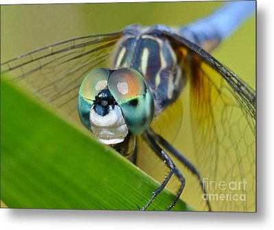 Metal Print featuring the photograph Face Of The Dragonfly by Kathy Baccari