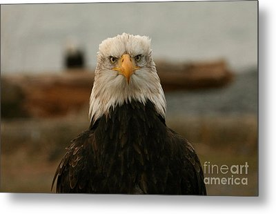 Face Off Metal Print by Crystal Magee