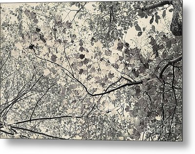 Faded Autumn Leaves Metal Print by Ted Guhl