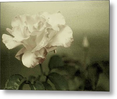 Metal Print featuring the photograph Faded Rose by Mary Wolf