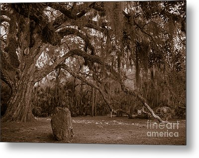 Fairchild Oak Metal Print