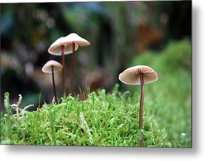 Fairy Bonnets Metal Print by Gerry Bates