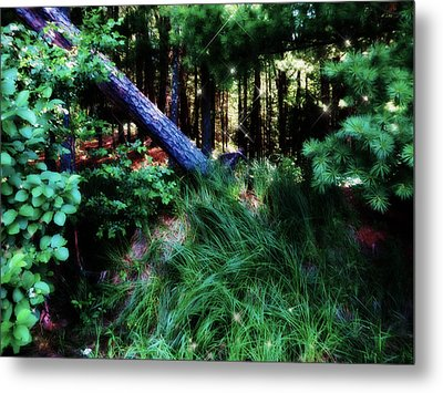 Metal Print featuring the photograph Fairy Forest by Jamie Lynn
