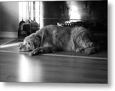 Metal Print featuring the photograph Faithful by Meaghan Troup