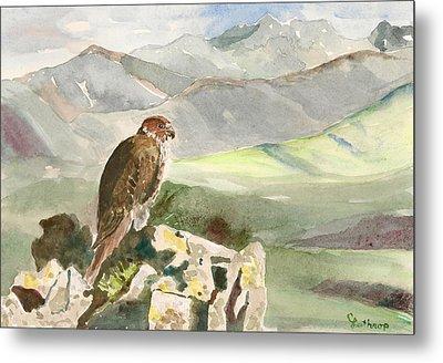 Falcon Metal Print by Christine Lathrop