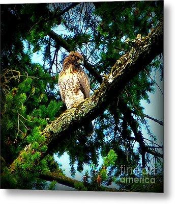Falcon High Metal Print by Susan Garren