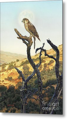 Falcon In The Sunset Metal Print