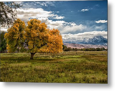 Fall And Winter Metal Print by Cat Connor