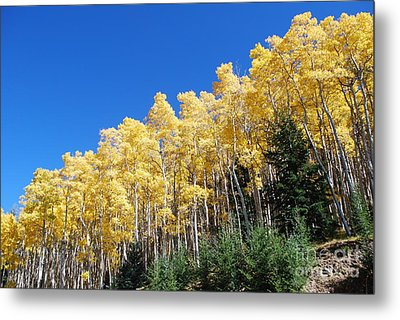 Fall Aspens Of New Mexico Metal Print by William Wyckoff