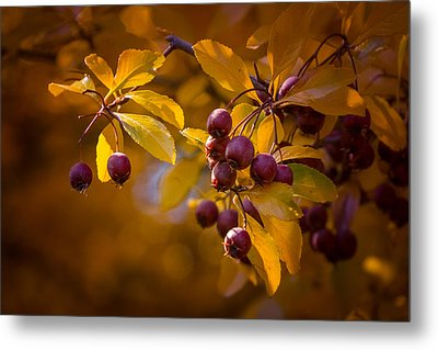 Fall Berries Metal Print by Janis Knight