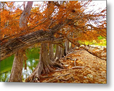 Metal Print featuring the photograph Fall Brilliance by David  Norman