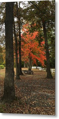 Fall Brings Changes  Metal Print