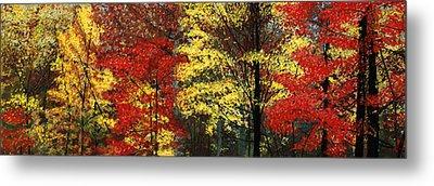 Fall Canopy Metal Print