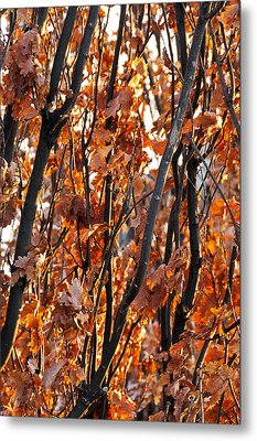 Fall Metal Print by Celso Bressan