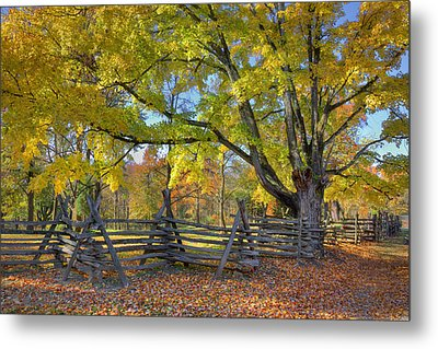 Fall Color #2 Metal Print by Wendell Thompson