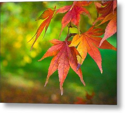 Fall Color Metal Print by Jeff Klingler