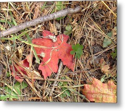 Fall Colors 6307 Metal Print by En-Chuen Soo