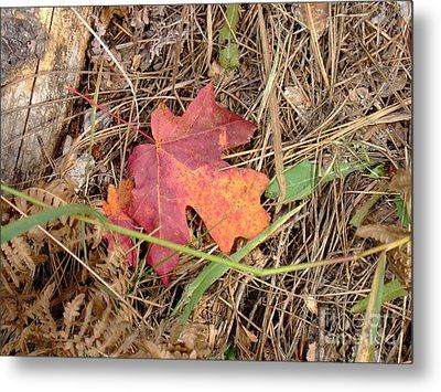 Fall Colors 6312 Metal Print