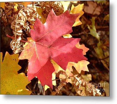 Fall Colors 6313 Metal Print