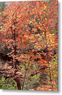 Fall Colors 6335 Metal Print by En-Chuen Soo